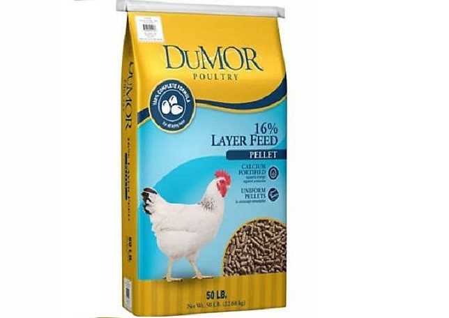 Layer Chicken Feed