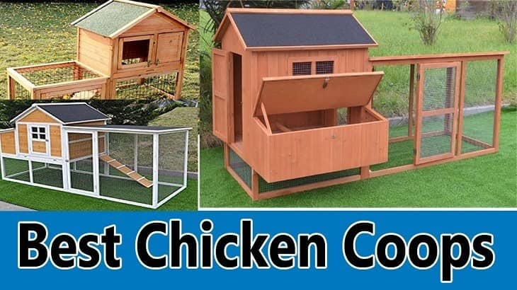 best-chicken-coops