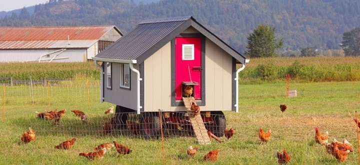 Different Areas in a Chicken Coop
