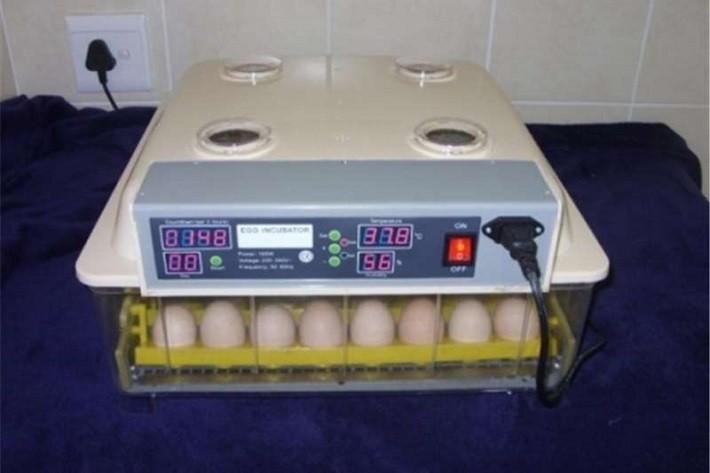Increase Humidity Chicken Incubator