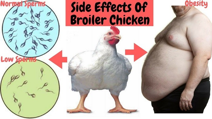 side effects of broiler chicken