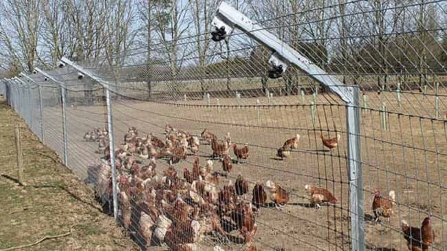 Different poultry fencing options