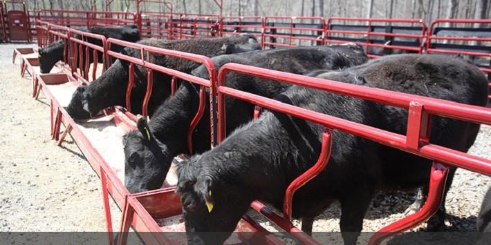 Best Cattle Feeders