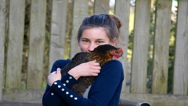 Catching a Chicken