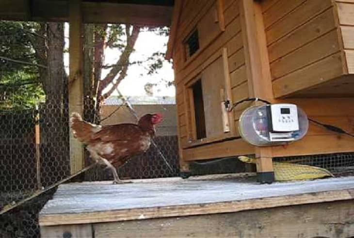 How to Build a Chicken Coop Door