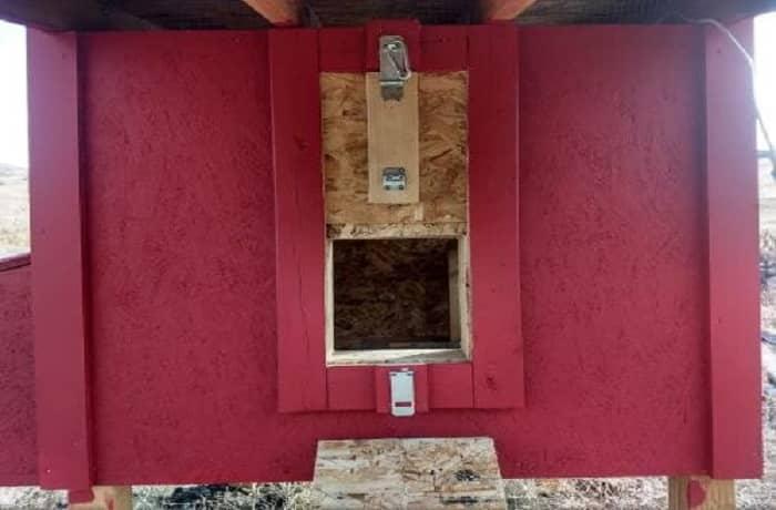 What Size Door Opening for Chicken Coop